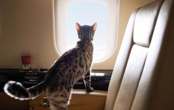 Private Jet Petcations